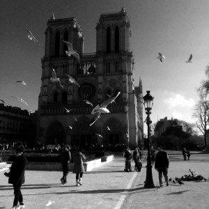 Notre Dame, Paris, janvier 2016 Copyright Olivier Coulon